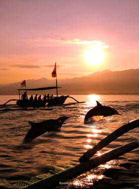 Dolphin Spotting North Goa